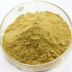 Ginger extract/ Ginger P.E/Turmeric Extract